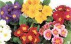 Цветы уличные в Калининграде